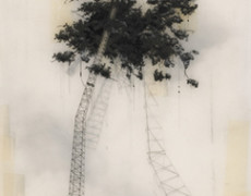 Brooks Salzwedel, Nest High, 2013