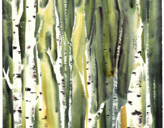 Mayee Futterman, Green Birch, 2013