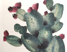 Mayee Futterman, Prickly Pear, 2015