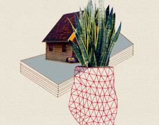 Hagar Vardimon, Home and plant/big-plant, 2013